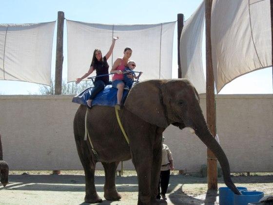 Elephant ride!