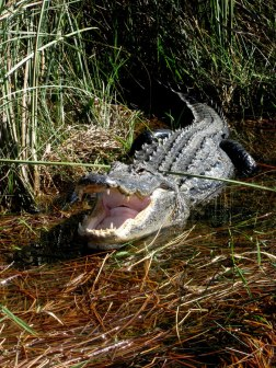While on the Everglades airboat tour