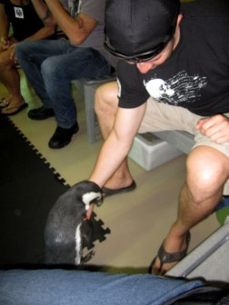 This Penguin LOVED Troy. He wanted belly scratches