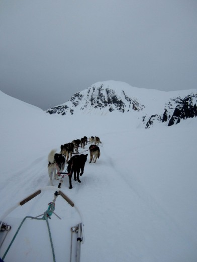 Dog sledding at Punch Bowl Glacier