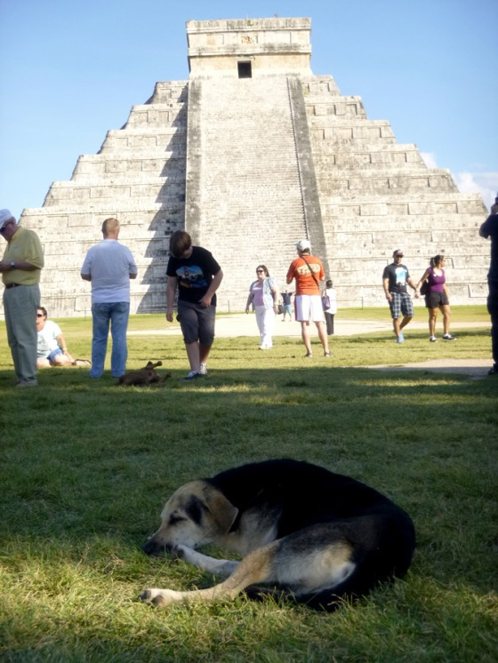 Stray dogs located everywhere in Mexico