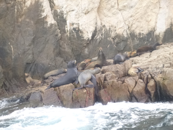 Sea Lions in Cabo