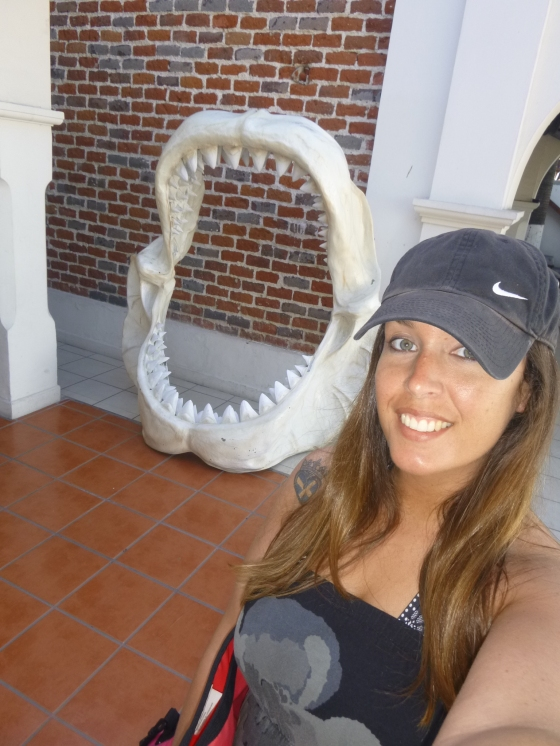 whaleshark13