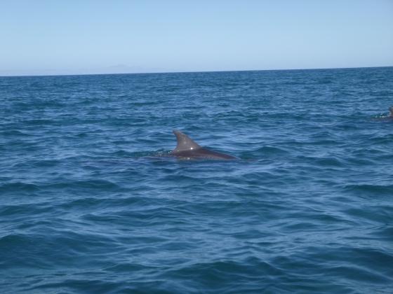 whaleshark17