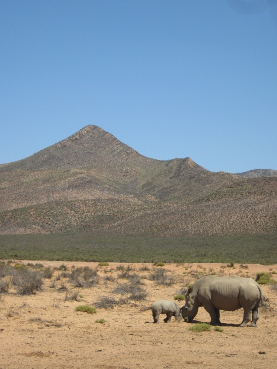 safari14