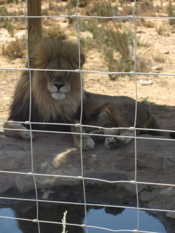 safari26