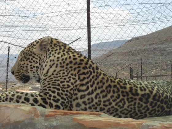 safari27