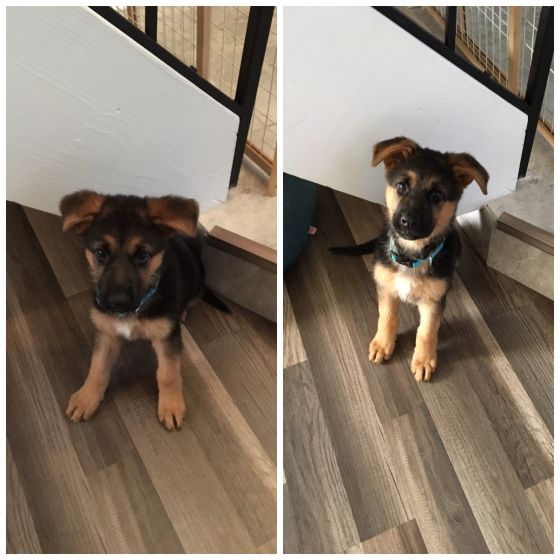 8weeks vs 9weeks