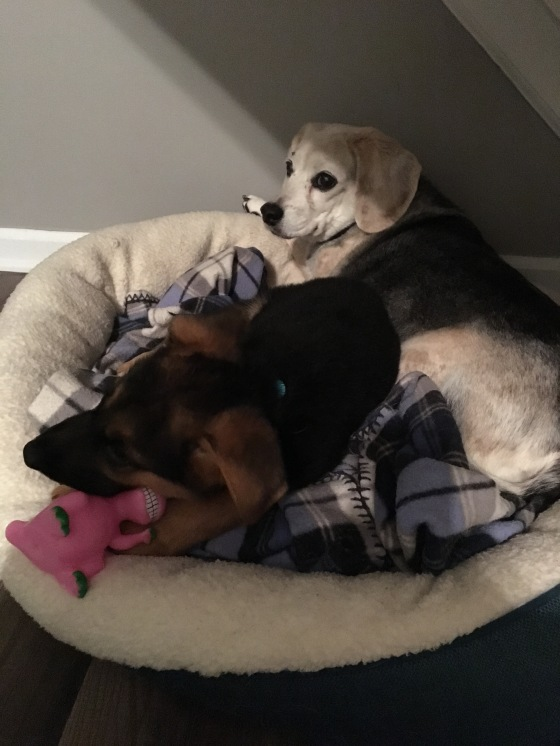 Daisy attempting to share her bed