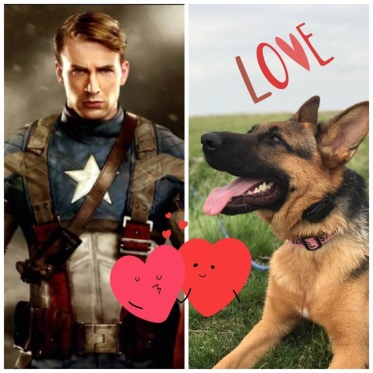 Why Marvel loves Captain America: to stop her separation anxiety while in a crate it was suggested to play movies for her. Captain America Civil War was currently the longest movie on Netflix so she watched it twice a day daily for a few months. She would legit watch it too. After awhile, I noticed she recognized Chris Evans' voice and thus her love for him was born.